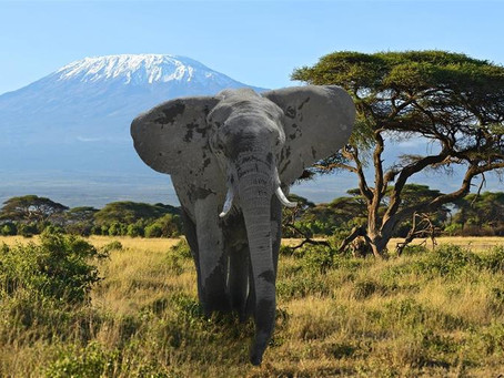 Safe, Sustainable Safaris That You Can Go On Now