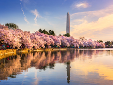 Must-See Spring Blooms