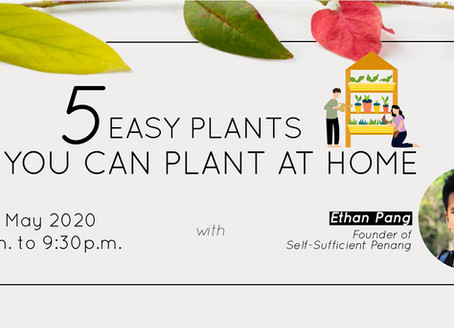 ARE PLANTS EASY TO PLANT AT HOME?