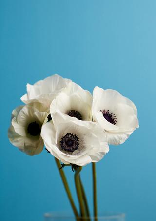 Bloom_004_100dpi.jpg