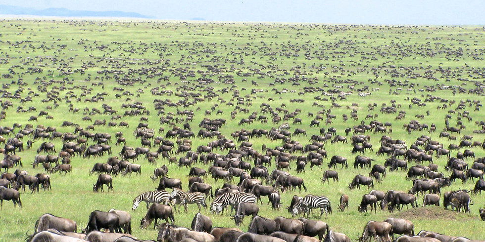 The Great Migration Oct 2021
