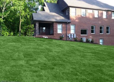 New Zoysia lawn