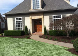 new lawn & shrubs