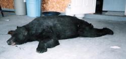 bearkill