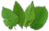 GreenMakers Leaves