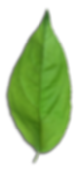GreenMakes Leave