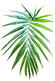 palm-4854921_1280.png