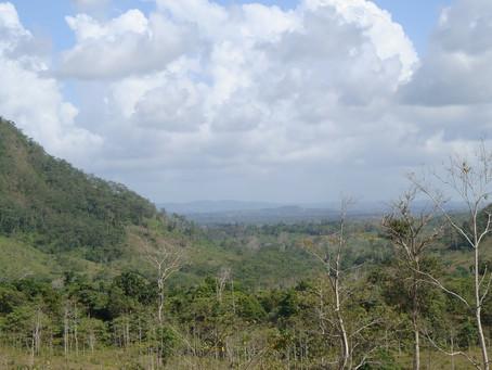 Acaparamiento de tierras: un atentado medioambiental