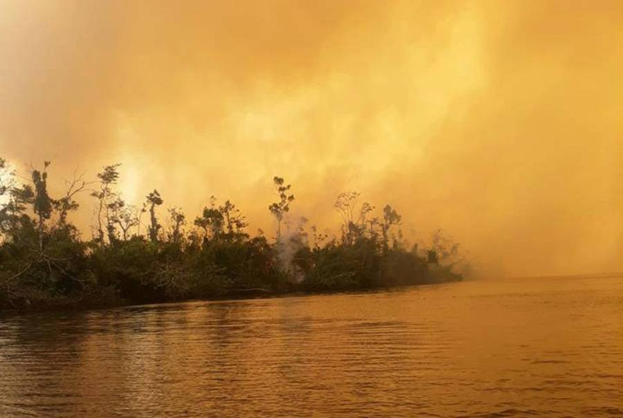 El incendio en la Reserva Indio Maíz duró más de 1 semana y según Rosario Murillo, hoy, 13 de Abril, el incendio fue extinguido