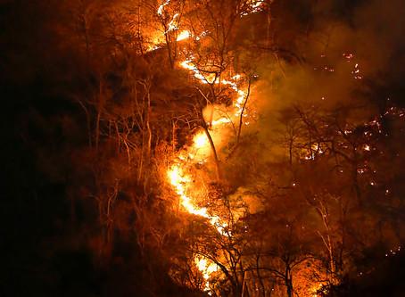 ¿Por qué seguirá ardiendo la Amazonia?