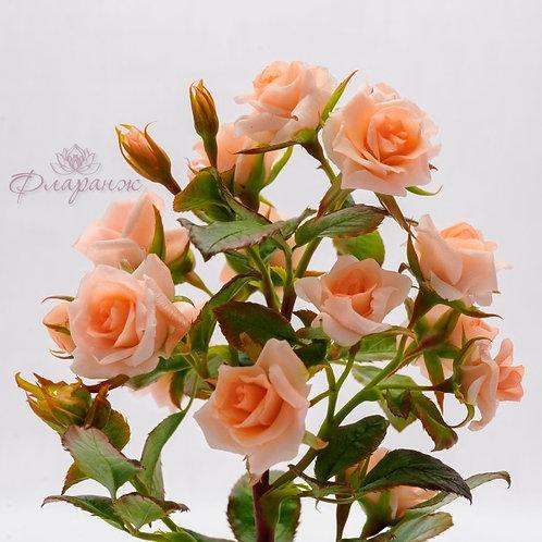 Французская карамельная кустовая роза в куполе