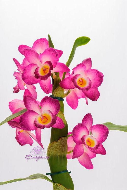 Орхидея дендробиум в горшочке