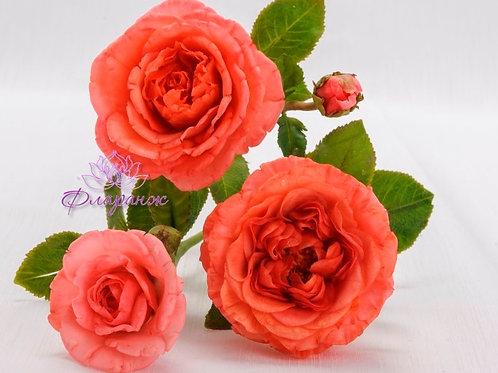 Английчкая кустовая роза