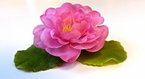 садовая роза.png
