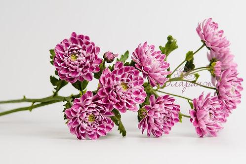 Ветка хризантемы