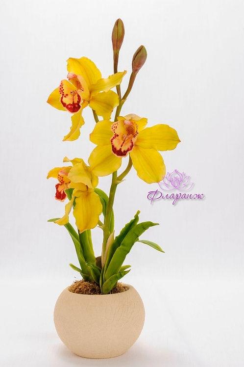Орхидея цимбидиум в горшке на заказ
