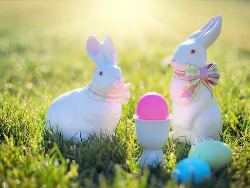 No chocolate treats for pets – an Easter warning