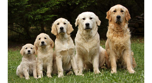 Correct feeding for your dog's life stages