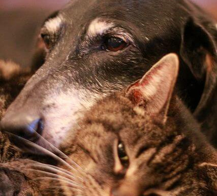 Aging gracefully: being kind to senior pets