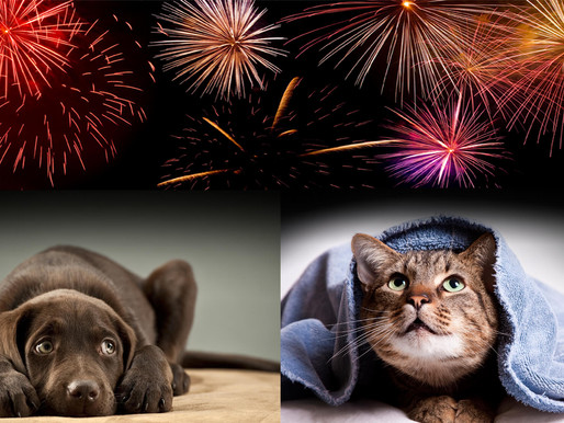 Firework stress worsened by rich foods