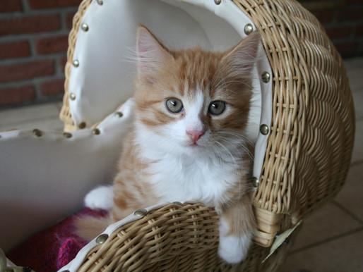 The best start for a new pet kitten
