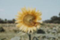 ORG_DSC02670-2.jpg