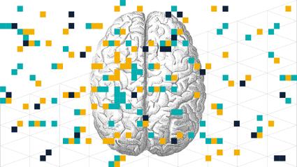 Colocando a neurociência na sala de aula: como o cérebro muda à medida que aprendemos!
