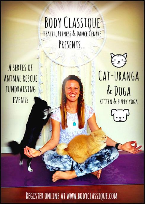 yoga camden narellan macarthur kitten yoga cat yoga doga