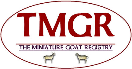 Mini dairy Goat, Mini Nubian, Minu LaMancha