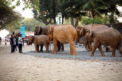 TREC at Fort Kochi (2)_edited.jpg