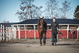 28042021 Oulun hevosklinikka_52A0969.jpg