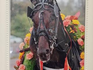 Team Elian Web toi palkintoloimensa Oulun hevosklinikalle