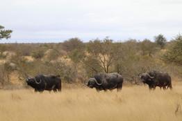2018 SA Kruger6.jpg