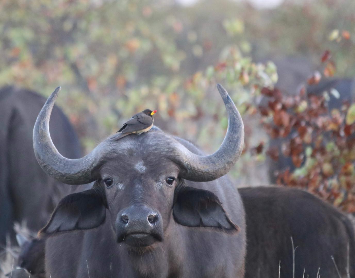 2018 SA Kruger21.jpg