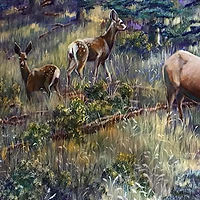 Fauna Gallery.jpg