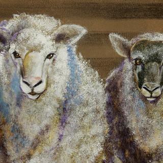 Trinity Baptist  Noahs Ark Animals  24.j