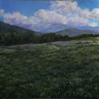 Cuchara Pass Meadow