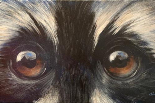 Skunk Eyes