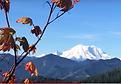 Mount Rainier with mountain ash in autumn colors