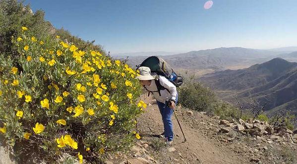 hiker smelling flowers in desert  - Pacific Crest Trail  - copyright friendlyhiker.com