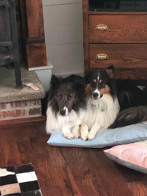 Brynna and Willa
