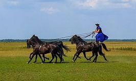 Puszta Horse Farm.jpg
