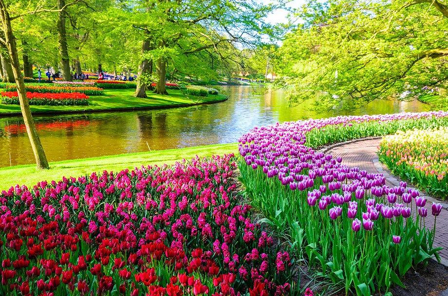 Amsterdam%20Keukenhof_edited.jpg