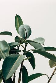 Inneneinrichtung Pflanze