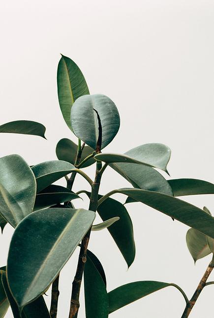 Interior Decor Plant
