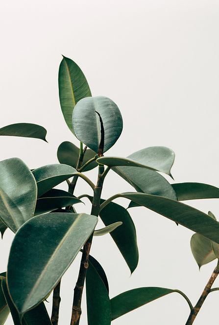 Planta de decoración interior
