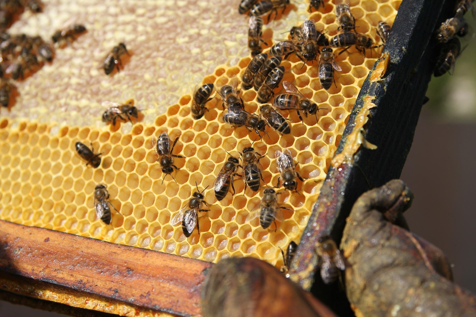 cadre&abeilles