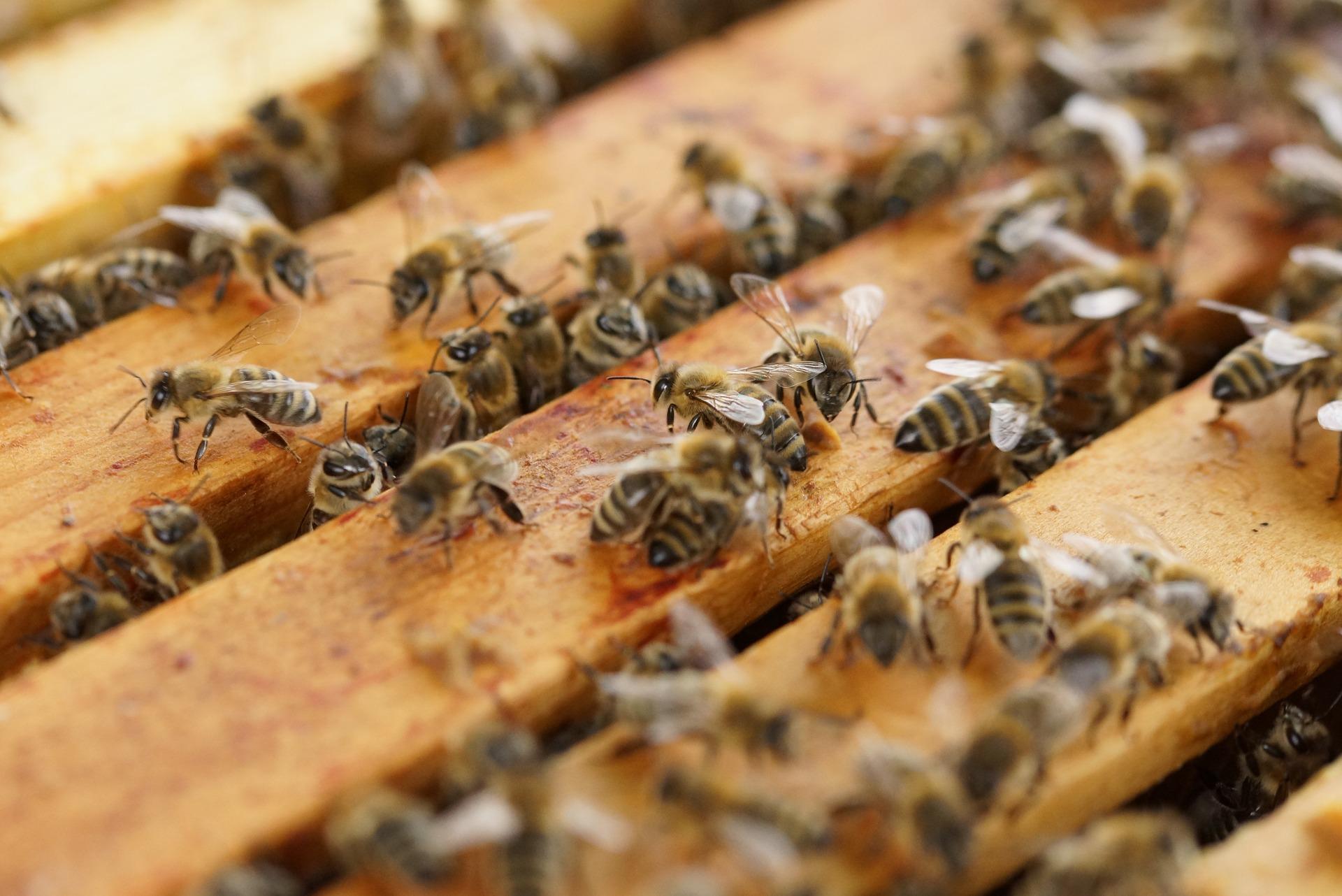 beehive-1143380_1920