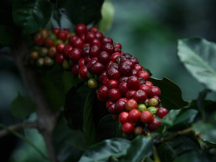 Coffee … what you might not know about those beans