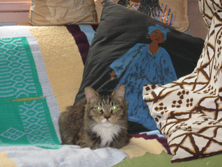 The MYA Library and Rascal the museum cat